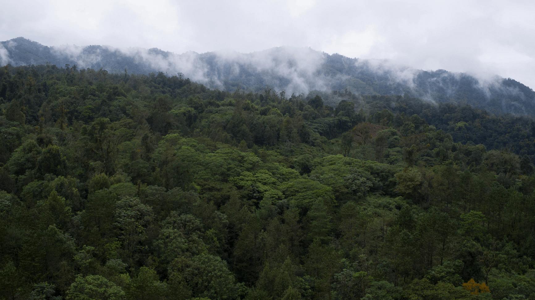 LX Legislatura, aprueba en Comisión exhorto para la preservación y protección de zonas forestales en la entidad