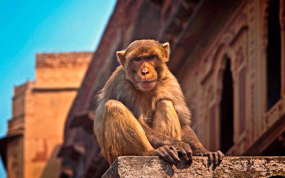 Mono muerde a 250 por no tener más bebida alcohólica