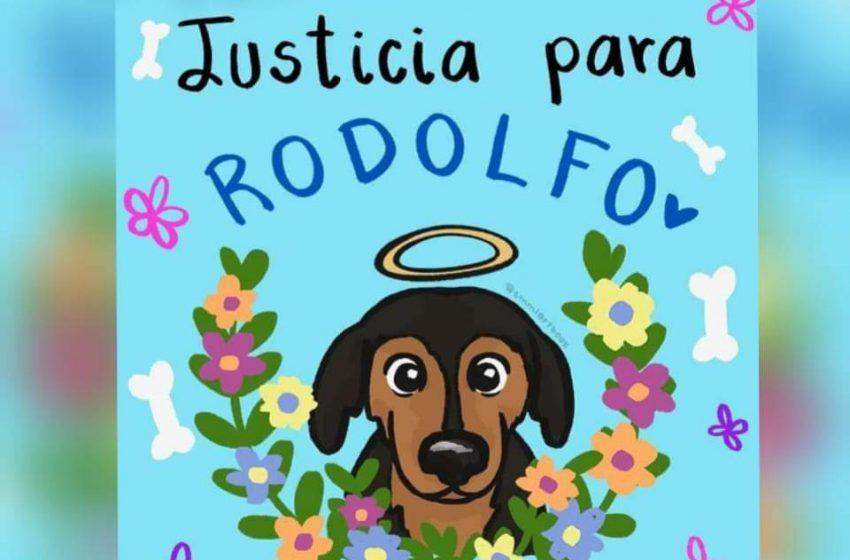 Animalistas poblanos convocan marcha por Rodolfo Corazón
