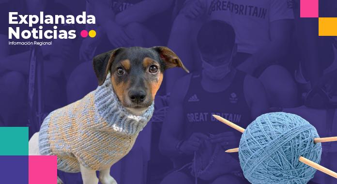 Clavadista olímpico se viraliza por tejer suéter de perrito