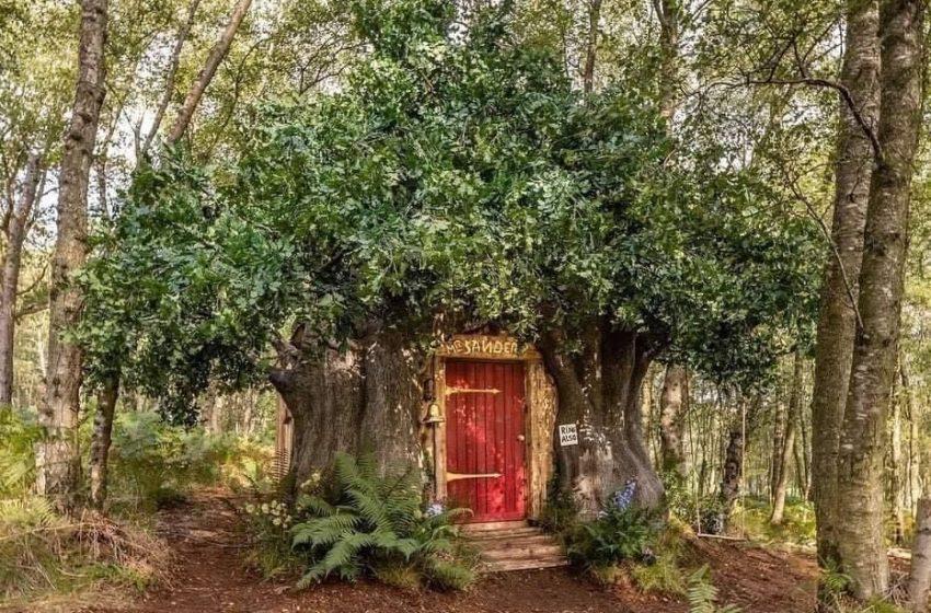 La casa de Winnie the Pooh llega a Airbnb